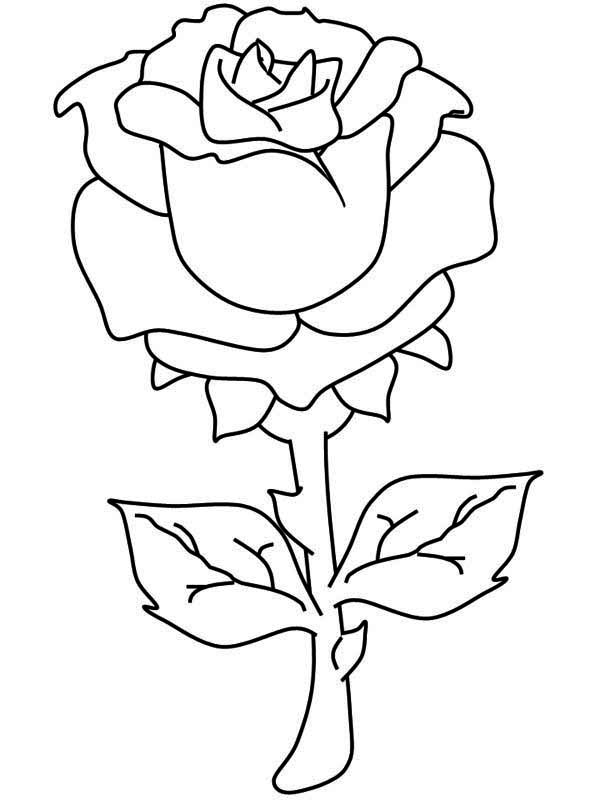 Rose Pictures To Color