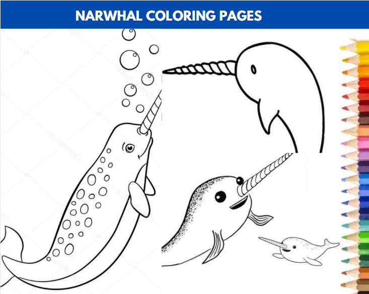 Narwhal Coloring Pages