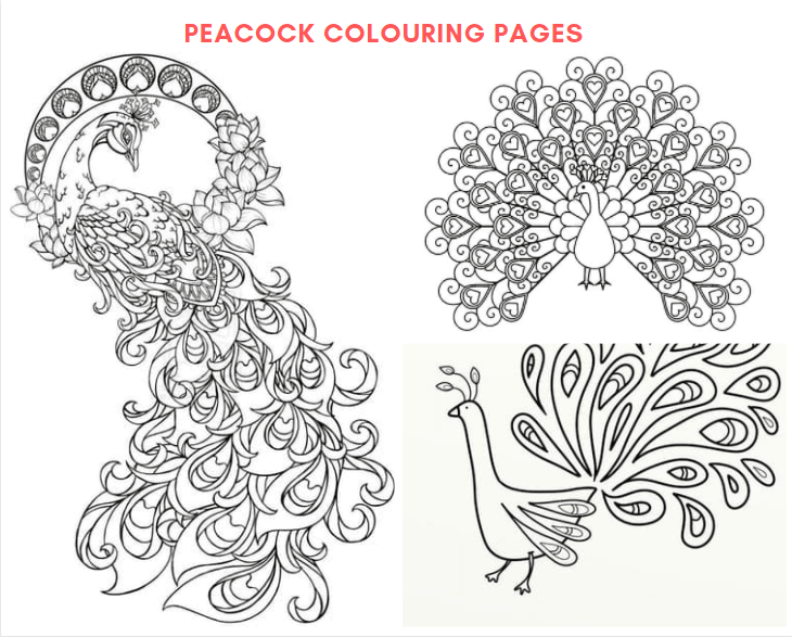 Peacock Colouring Pages