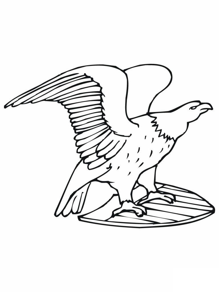 Bald Eagle Color Page