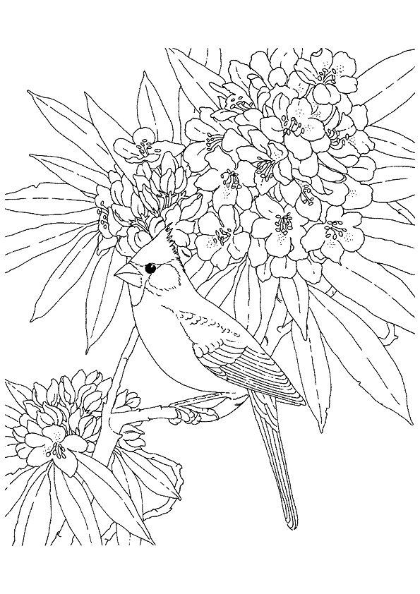 Cardinal Bird Coloring Page Printable