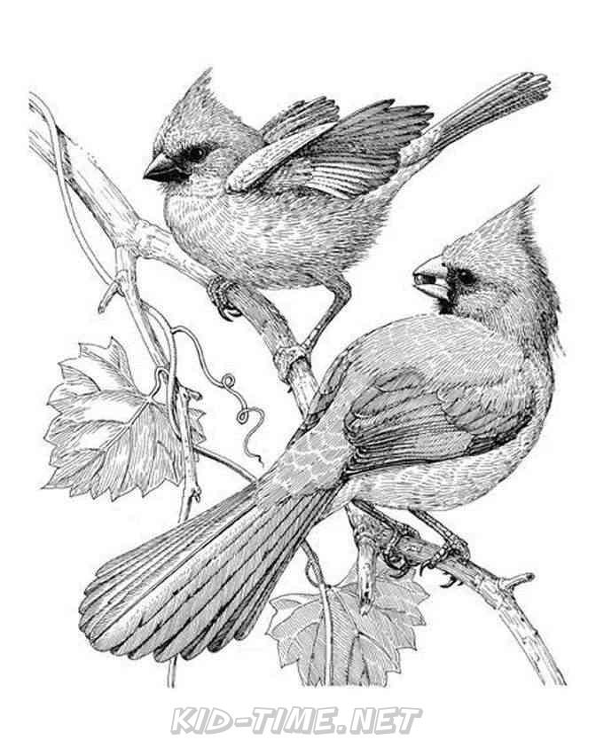 Cardinals Coloring Sheets