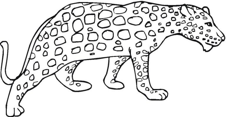 Cheetah Cub Coloring Pages