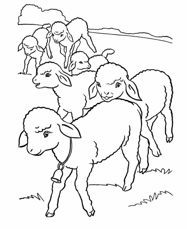 Coloring Page Sheep