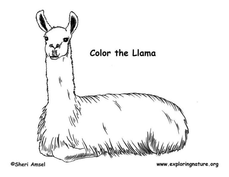 Coloring Pages Llama