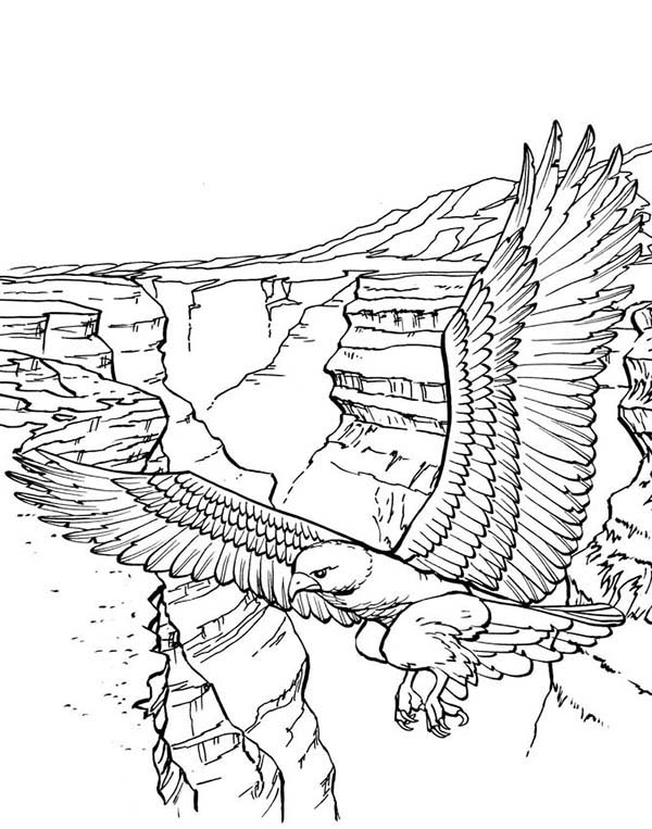 Eagle To Color