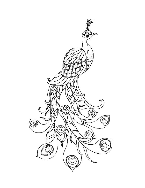 Easy Printable Peacock Coloring Pages