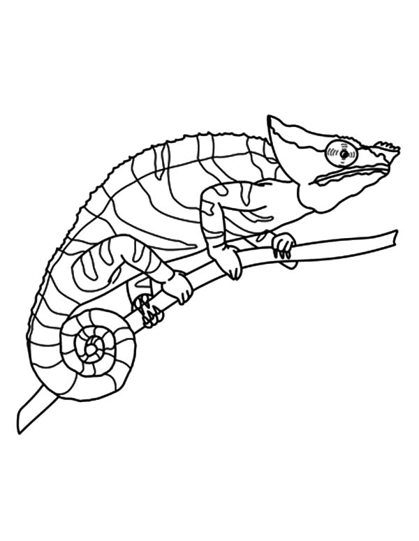 free Chameleon Coloring Sheet