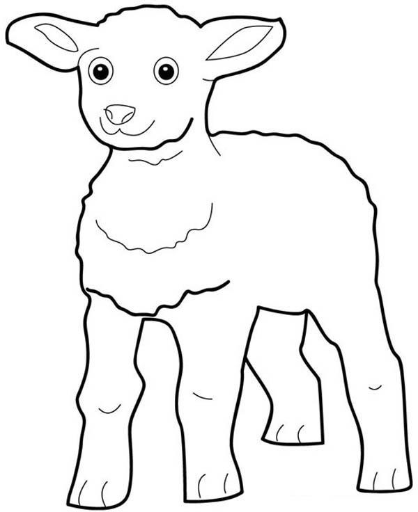 Free Sheep Coloring Page