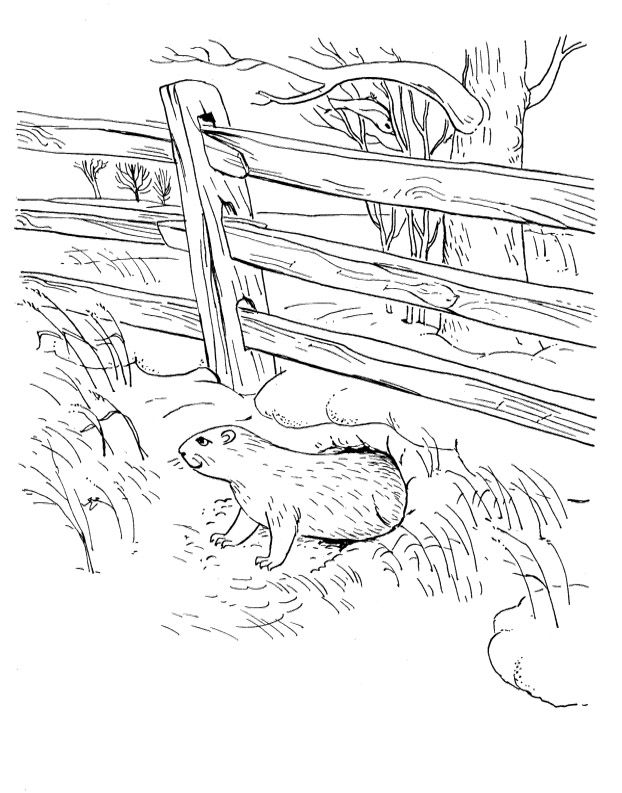 Groundhog Coloring Pages Free