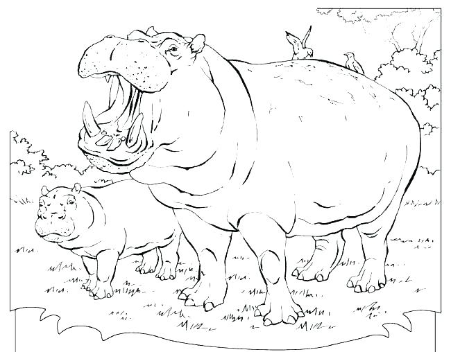 Hippo Pictures To Color