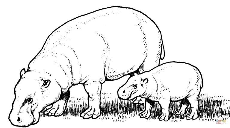 Hippopotamus Coloring