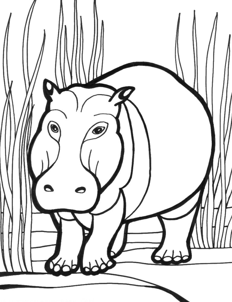 Hippopotamus Pictures To Print
