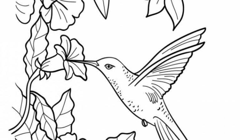 Hummingbird Coloring Books