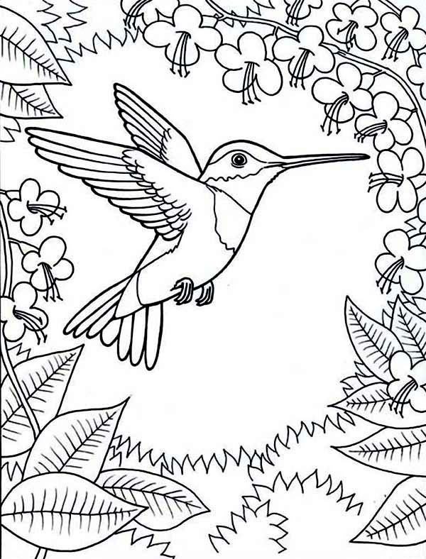 Hummingbird Coloring
