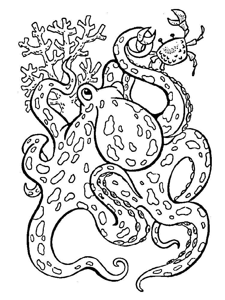 Octopus Pictures To Color