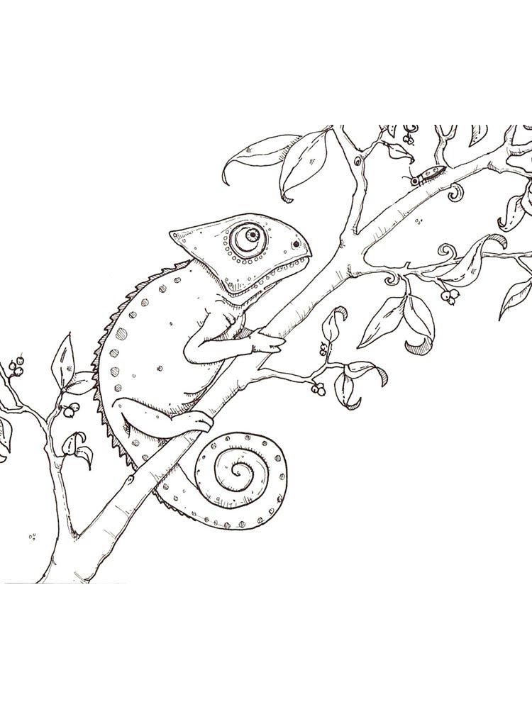 Picture Of Chameleon To Color