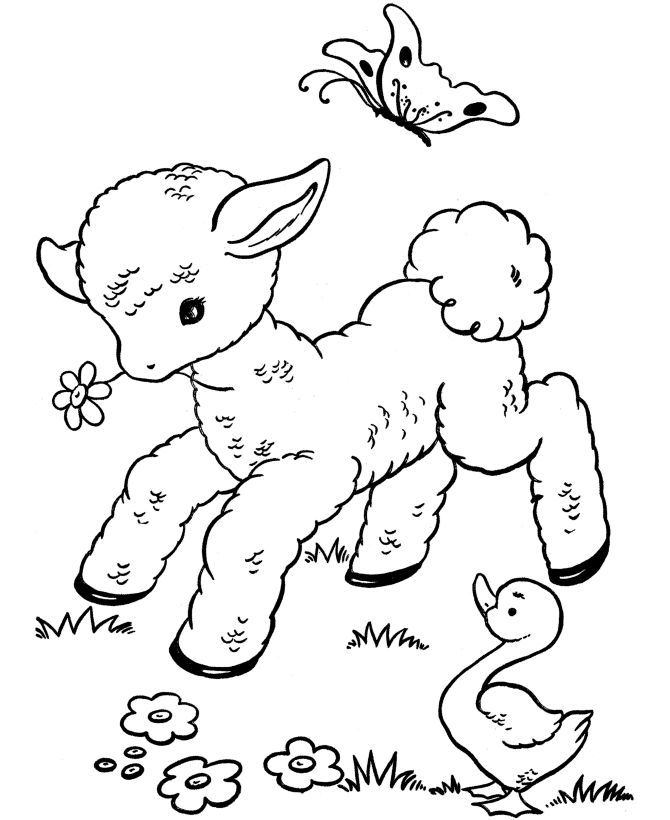 Picture Of Lamb To Color