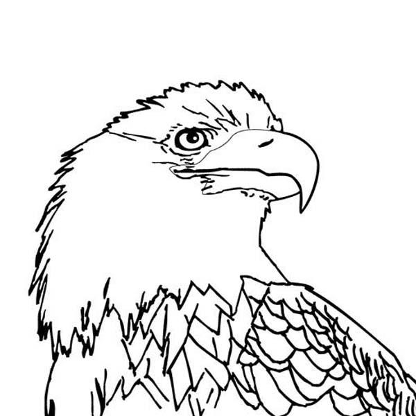 Printable Eagle