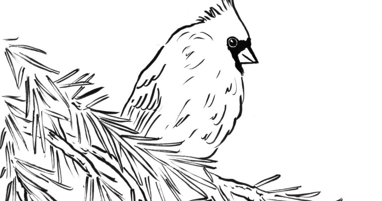 Printable Picture Of A Cardinal