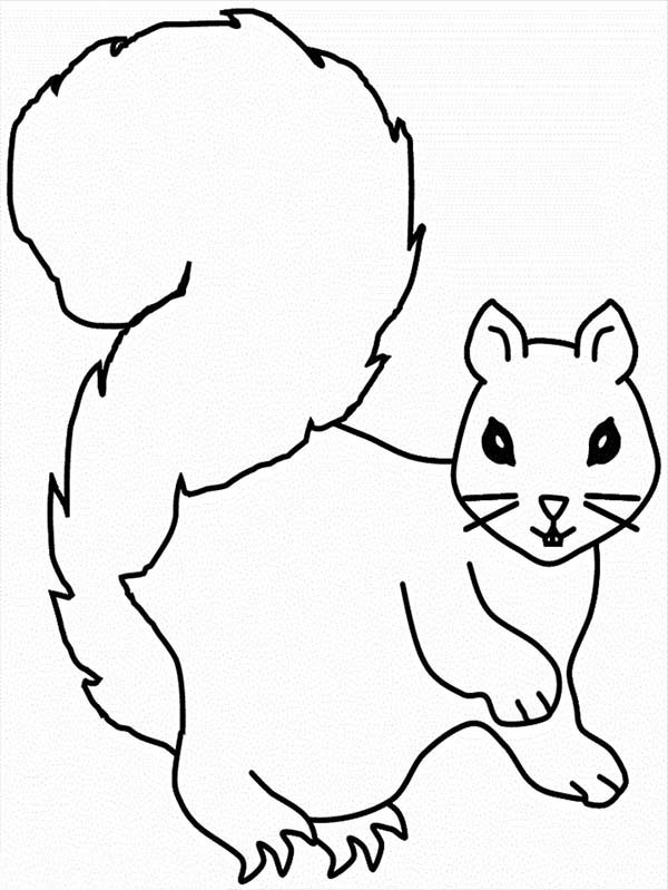 Printable Squirrel Pictures