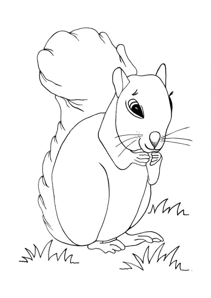 Printable Squirrel