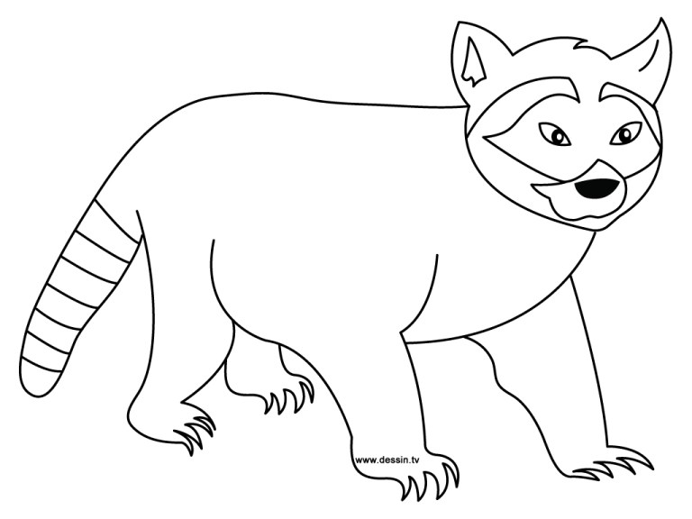 Racoon Coloring Pages