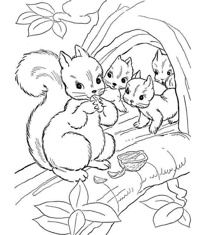 Realistic Squirrel Coloring Page