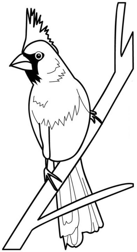 Red Cardinal Coloring Pages