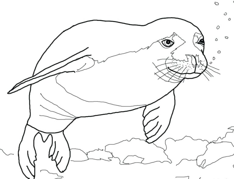 Seal Colour