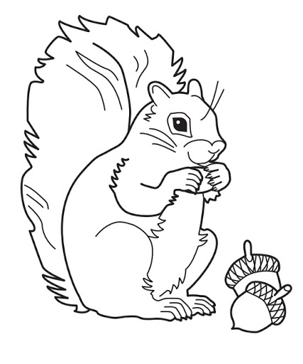 Squirrel Print Out