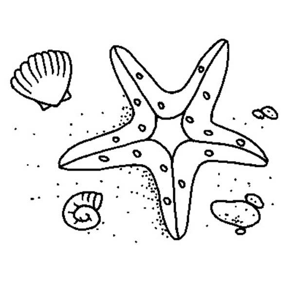 Starfish Coloring Pictures