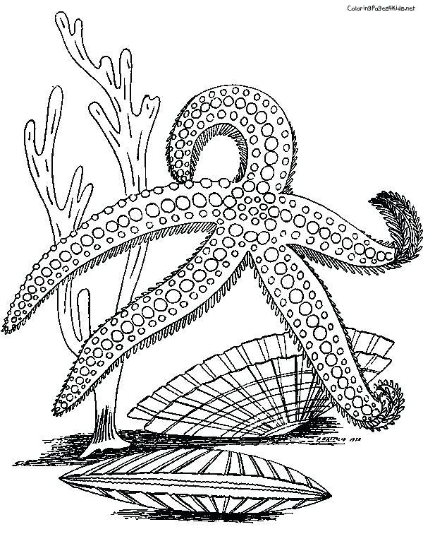 Starfish To Color