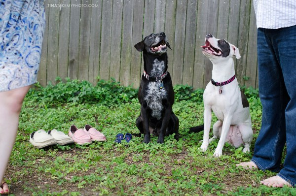 Baby-Annoucement-Dogs-Maternity-Photographer-Chesterfield-Virginia