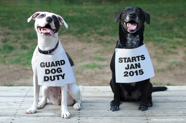 Baby-Annoucement-Dogs-Maternity-Photographer-Chesterfield-Virginia-Guard-Duty