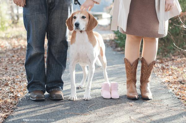 Richmond-Woodlake-Winter-Maternity-Dog-Photographer (1)