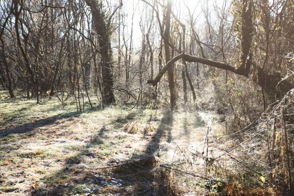 RVA Pony Pasture Foggy Morning