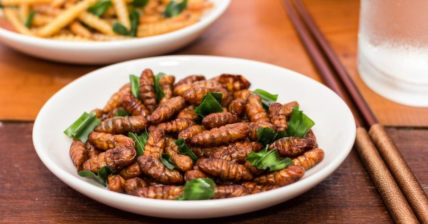 entomophagy - the practise of eating insects
