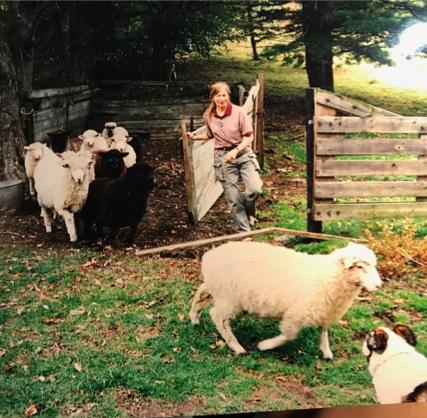 Sue w_sheep