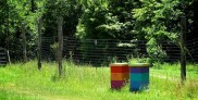Happy bee hives