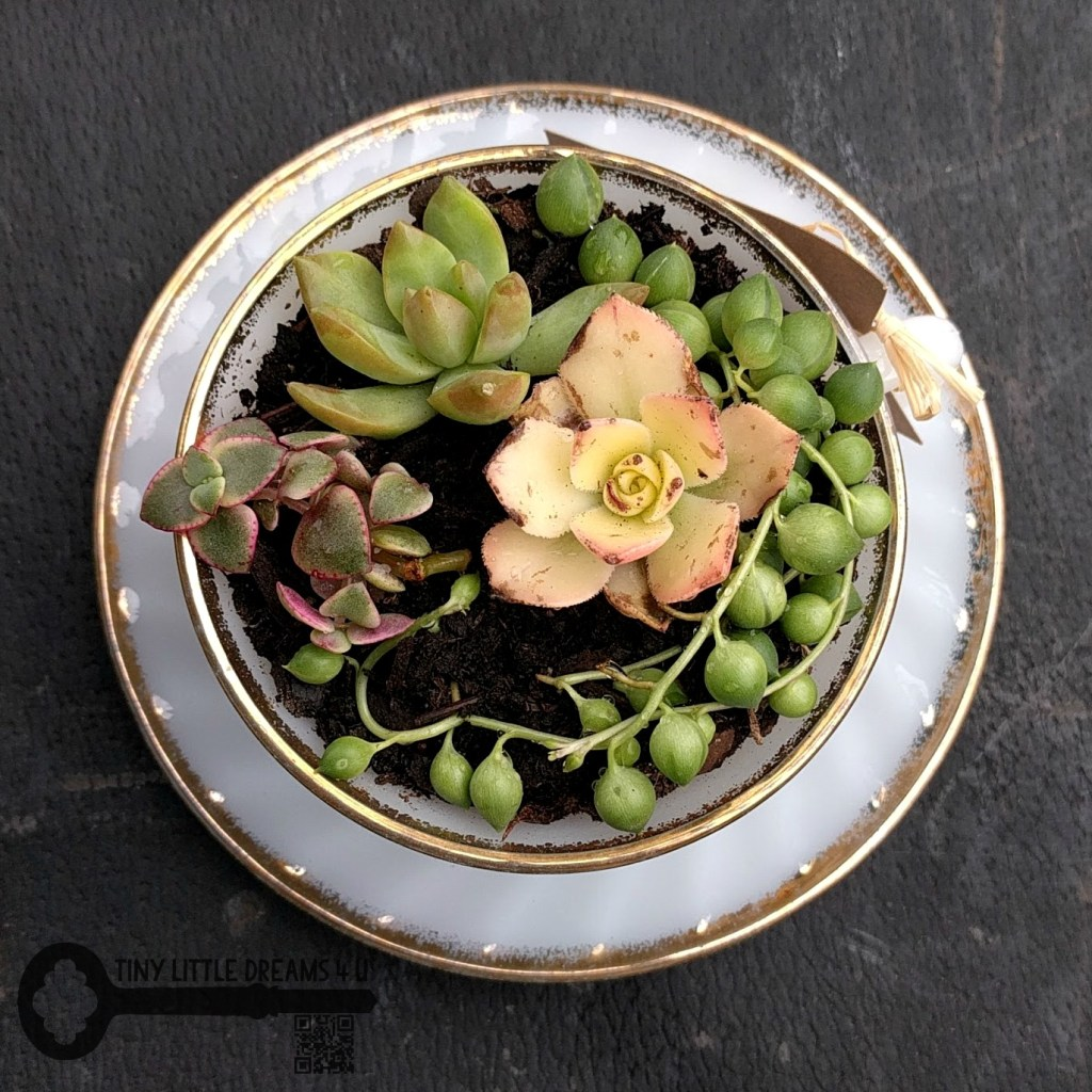 Succulents in a Tea Cup