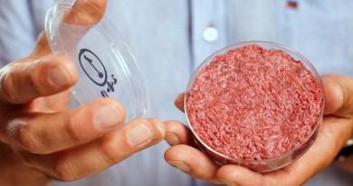 L'agriculture cellulaire ou comment manger un hamburger sans tuer un boeuf ?
