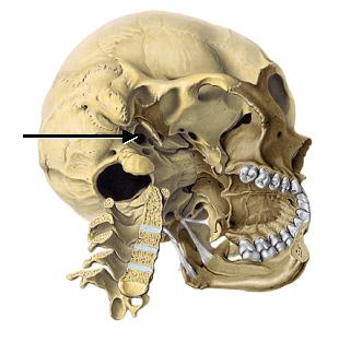 foramen jugulare