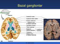 bazal ganlionlar - piramidal ekstrapiramidal sistem