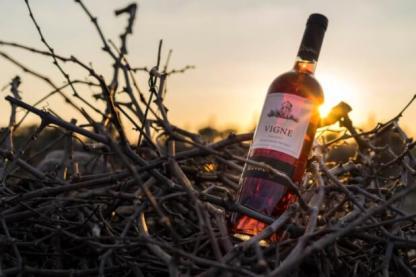 vino negroamaro rosato tenuta vigne torre ospina