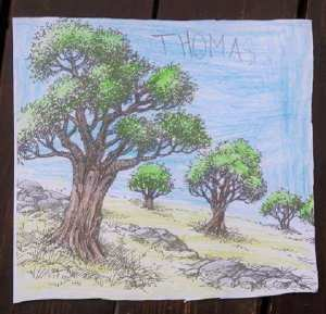 disegno-alberi-di-olivo