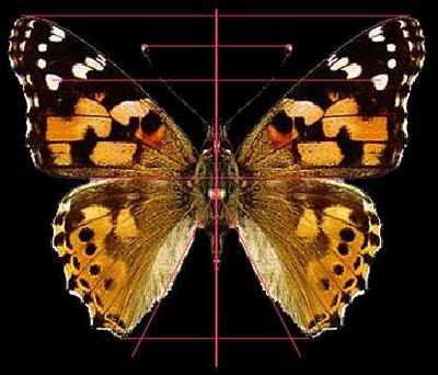 Resultado de imagen para simetrias naturaleza