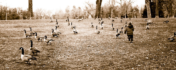running with geese