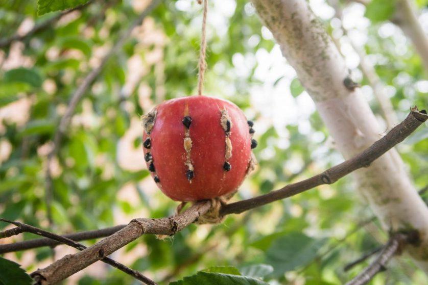 Make Your Own Apple Bird Feeder