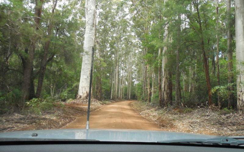 In auto dentro la Valle dei Giganti del Western Australia
